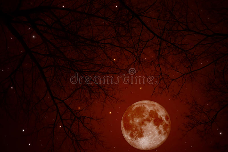 Bloody moon. Red bloody moon in the night sky royalty free stock photography