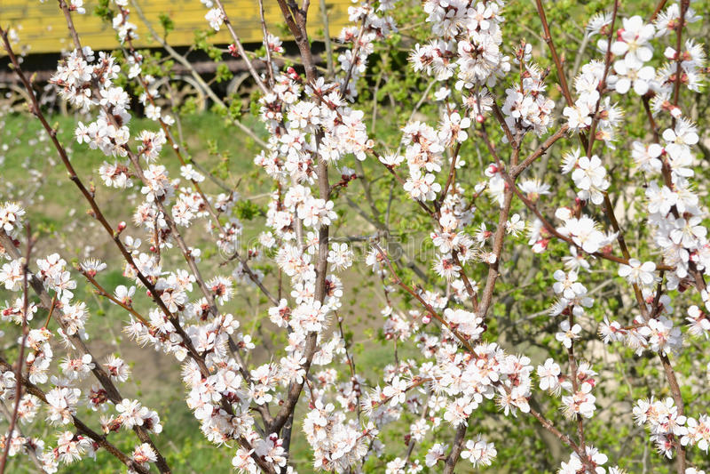 bloom zdjęcia stock