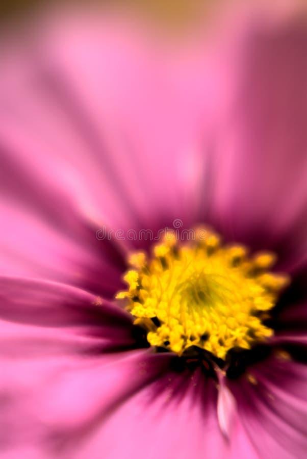 Bloom Blur royalty free stock photo