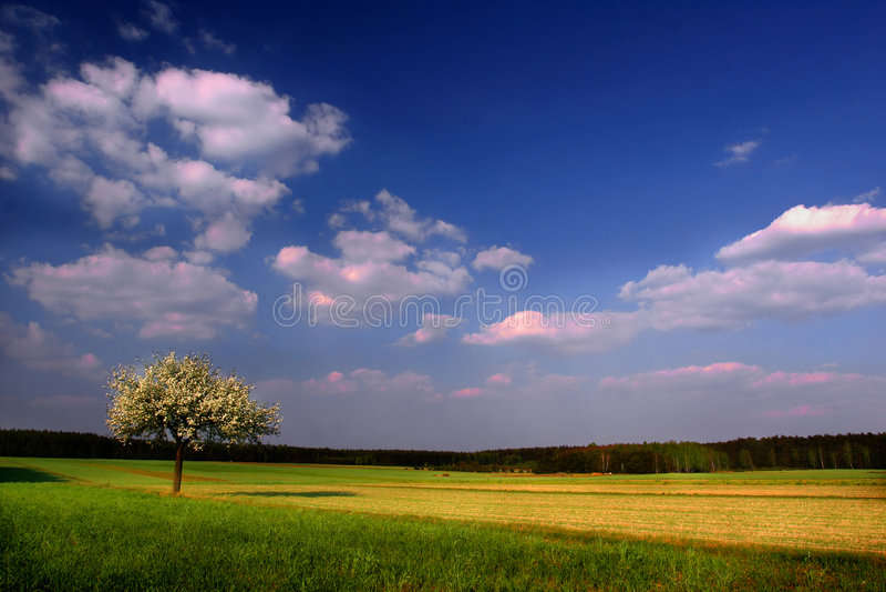 bloom drzewo obraz royalty free