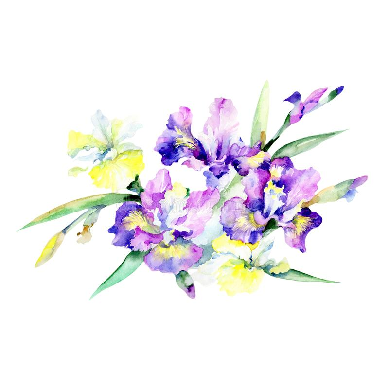 Bloom flower purple. Floral botanical flower. Wild spring leaf wildflower isolated. Aquarelle wildflower for background, texture, wrapper pattern, frame or royalty free illustration