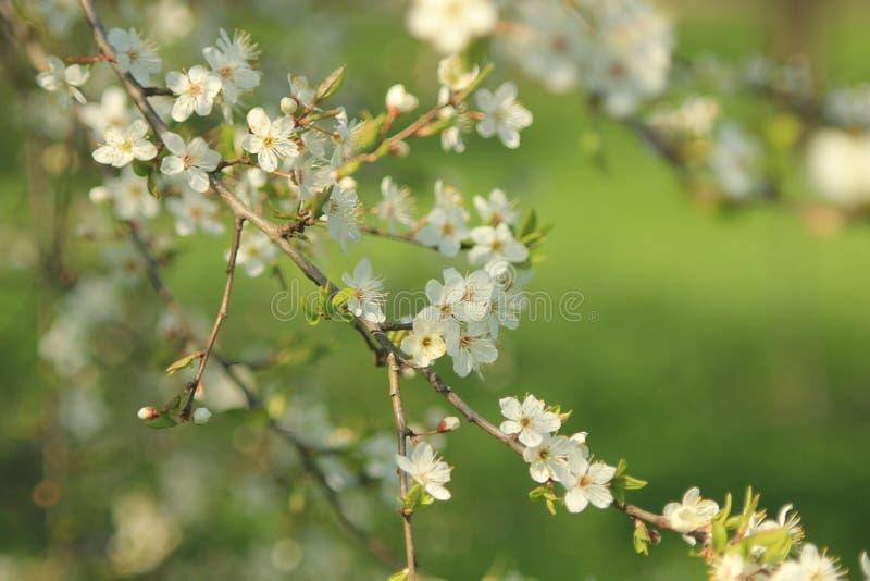 bloom ogród fotografia royalty free