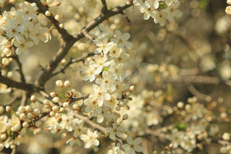 bloom ogród obrazy stock