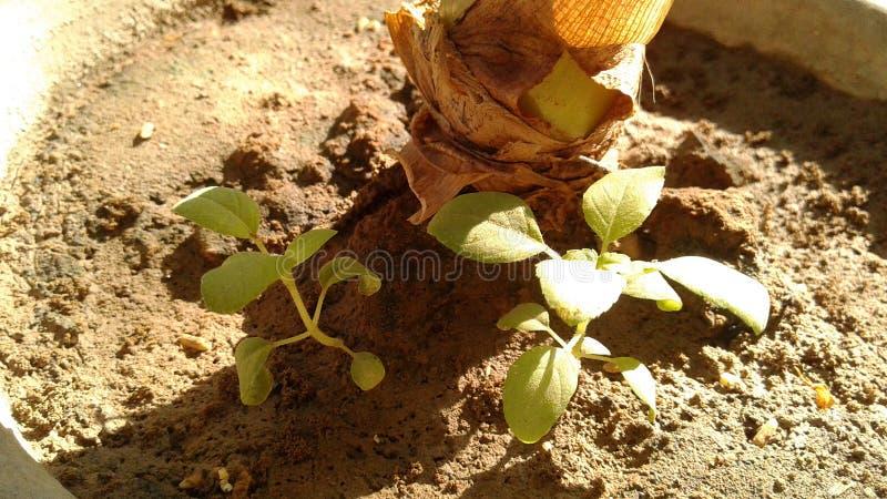 bloom roślin zdjęcia stock