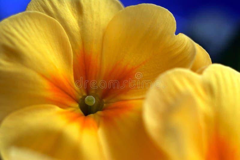 Bloom in spring. Nikon D200, Nikkor 2,8/60 Macro stock photo