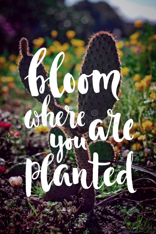 bloom where youare planted hand-written quote royalty free stock images