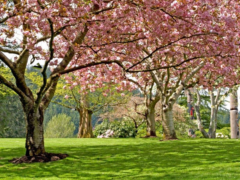bloom wiosen drzewa zdjęcia stock