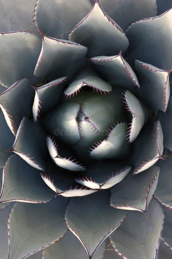 bloomer στοκ φωτογραφία με δικαίωμα ελεύθερης χρήσης