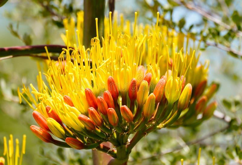 Bloomer för hög höjd royaltyfri fotografi
