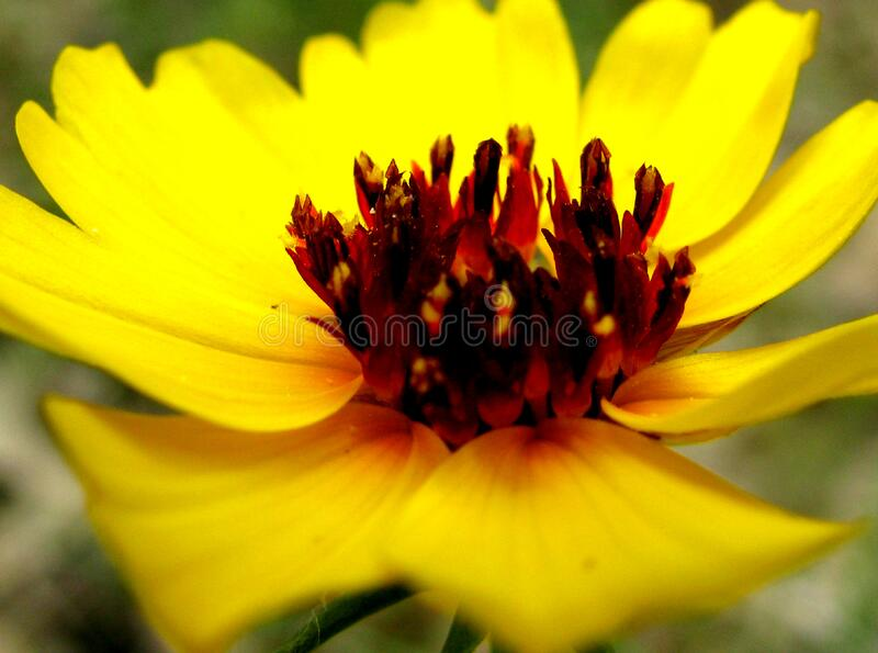 Blooming. royalty free stock photography