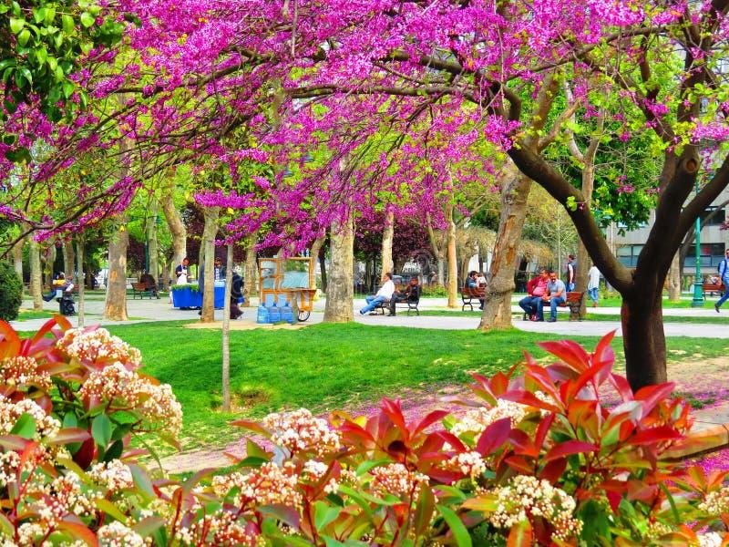 Blooming Alley Taksim Gezi Park stock photos