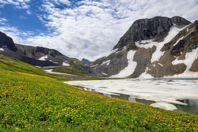 Blooming alpine meadow next to ice of mountain lake stock photography