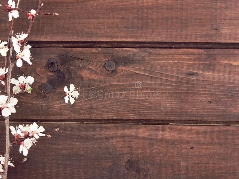 Download Blooming Apricot On Rustic Wooden Background Spring Stock Photo
