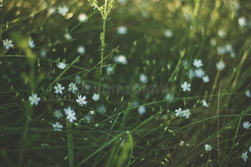 Blooming, Blur, Colors, Environment, royalty free stock image