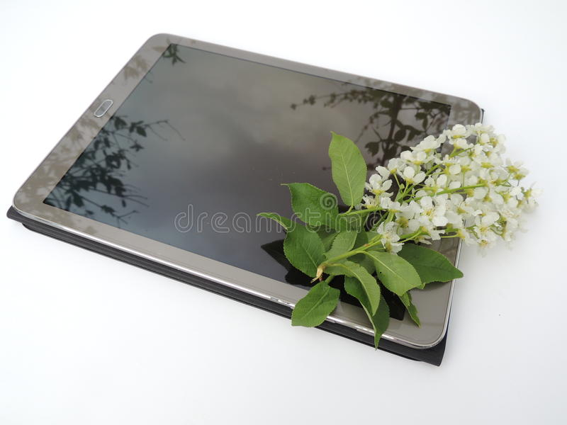 Blooming branch of cherry blossoms on a tablet screen royalty free stock photos