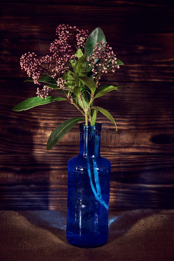 Blooming branch in a glass blue bottle on a dark background. Light painting. Blooming branch in a glass blue bottle on a dark background. The photo was taken in stock photography