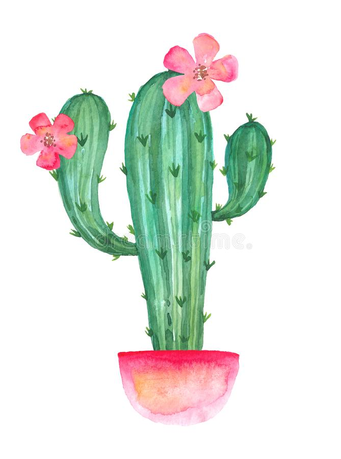 Blooming cactus branches in a pink pot with flowers, watercolor drawing royalty free illustration