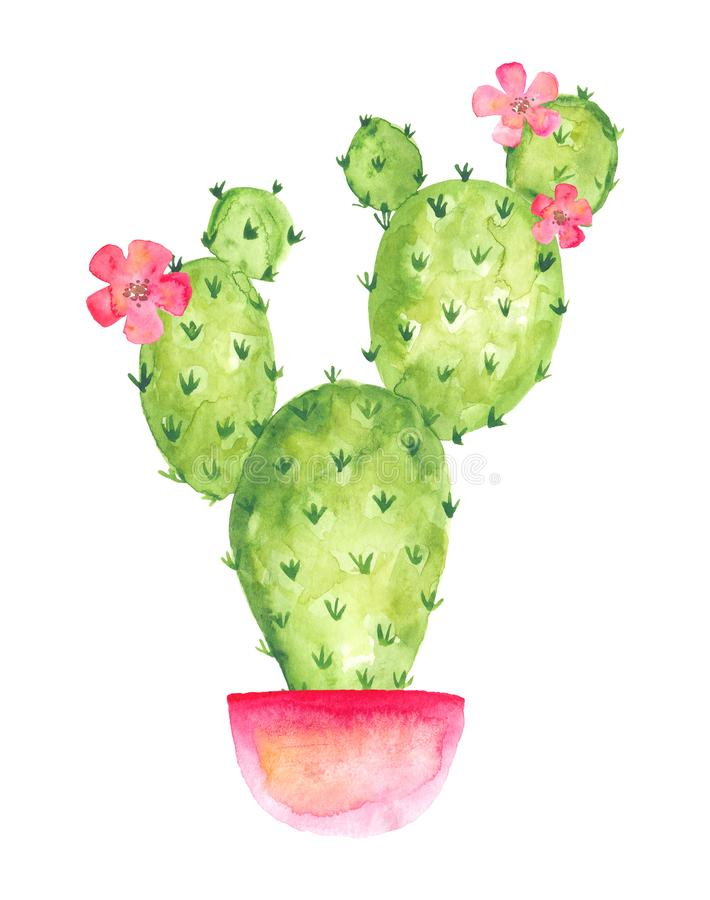 Blooming cactus in a pink pot with flowers, watercolor drawing vector illustration