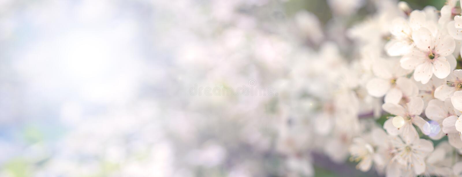 Blooming cherry branch in the spring garden at the wedding ceremony. stock images