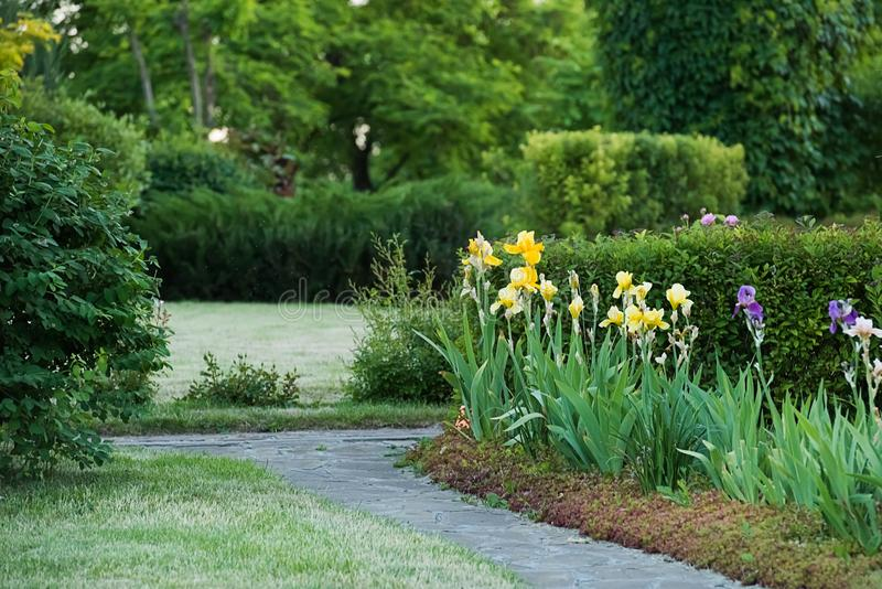 Blooming colorful iris flowerbed near sandstone footpath. Blooming colorful yellow and blue iris flowerbed near sandstone footpath in the garden or park. Summer stock images