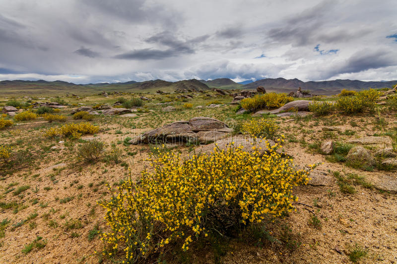 Blooming desert with clouds. Arizona, United States,. Blooming desert with clouds. Arizona, United States royalty free stock photos