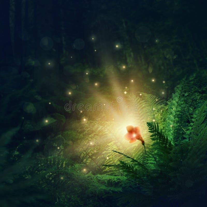 Blooming fern flower. A magic flower in Slavic mythology royalty free stock photo
