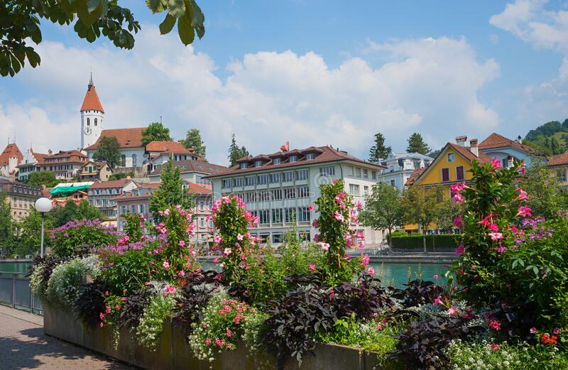 Blooming flower pots at riverside aare river, old town thun in switzerland. Blooming flower pots with pink mandevilla plants at riverside aare river, old town royalty free stock photography