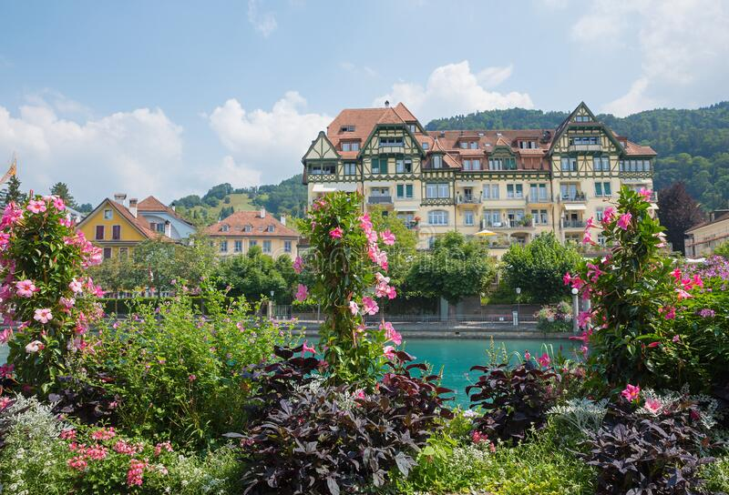 Blooming flower pots at riverside aare river, old town thun in switzerland. Blooming flower troughs with pink mandevilla plants at riverside aare river, old town stock photo