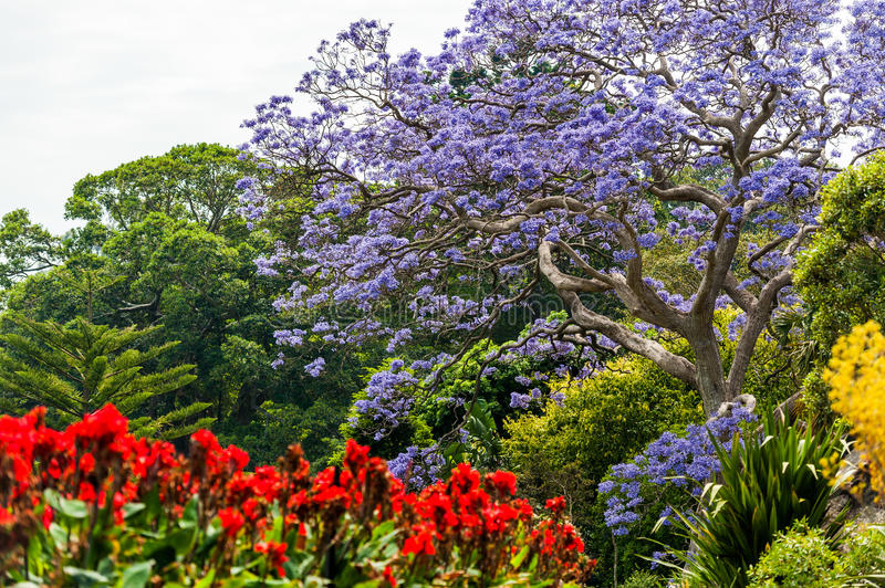 Blooming Flower in Royal Botanic Gardens in Sydney, Australia stock image