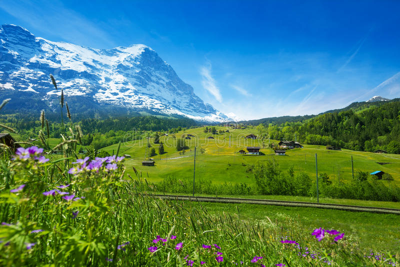 Blooming flowers with beautiful Swiss landscape royalty free stock photos