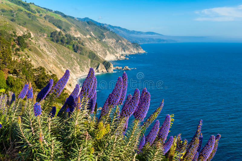 Blooming flowers in Big Sur California. Blooming flowers along coastline of Big Sur, California, USA royalty free stock photos