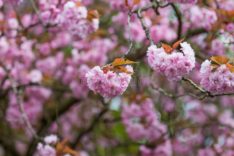 Blooming flowers on the branches stock images
