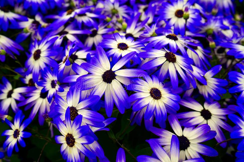 Blooming flowers royalty free stock photo