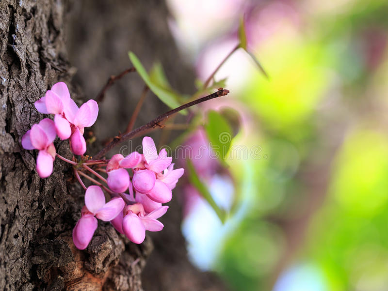 Blooming flowers in Spring royalty free stock photo