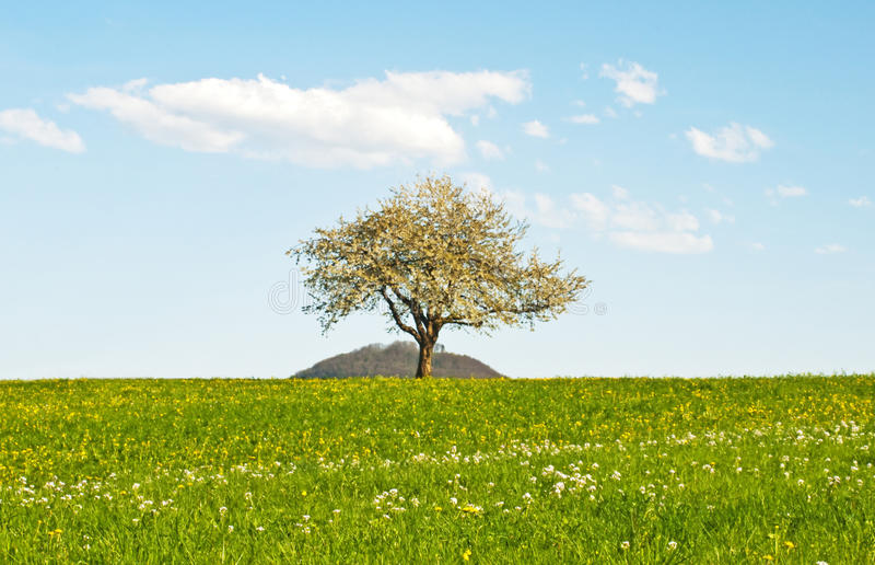 Download Blooming Fruit Tree Royalty Free Stock Photos - Image: 24576118