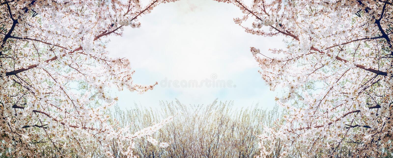 Blooming fruit trees over sky and spring nature background in garden or park royalty free stock photography