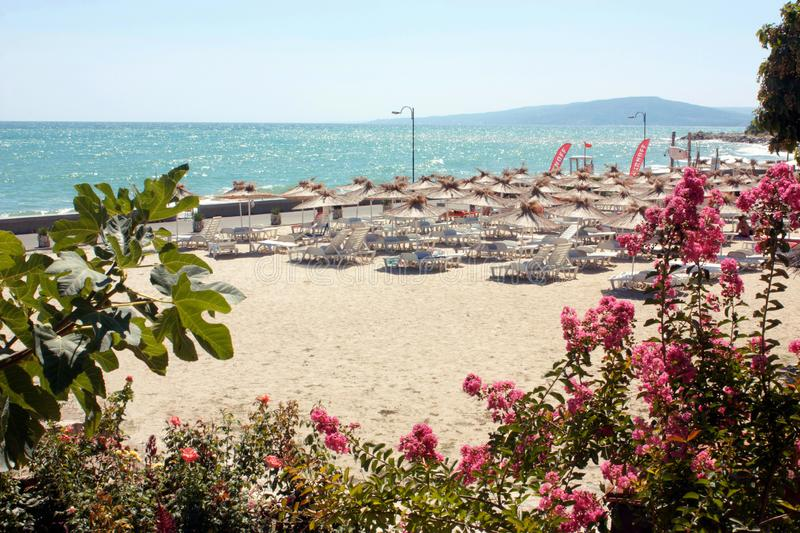Blooming garden and panoramic view on the beach with sun loungers and parasols, sea, sky and mountains, beautiful sunny royalty free stock photography