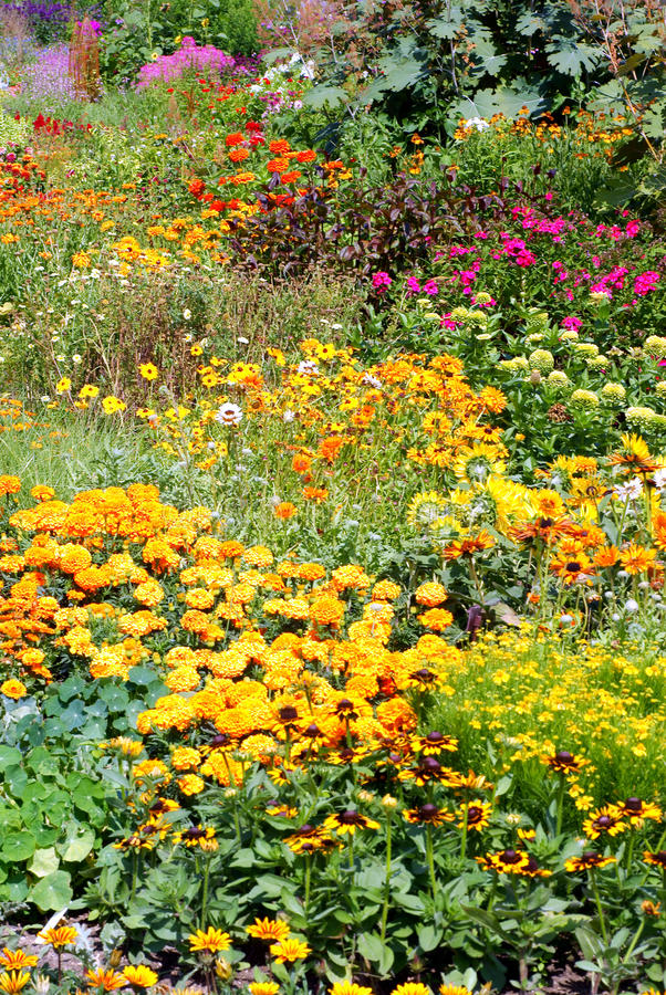 Free Blooming Gardens. Stock Photo - 15388640
