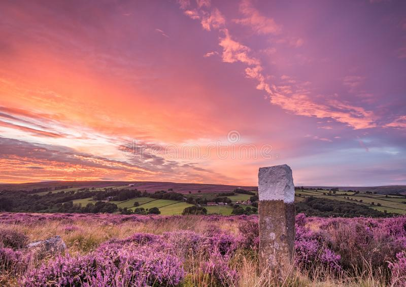 Blooming heather on the North Yorkshire Moors. At the height of summer the sun sets over the blooming heather on the North Yorkshire Moors stock image