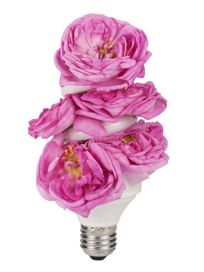 Blooming light bulb stock photos