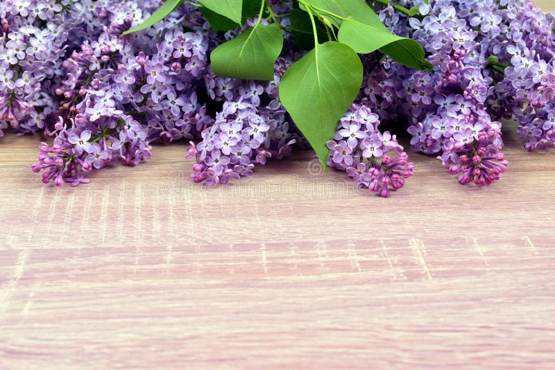 Blooming lilac flowers with green leaves. stock photos