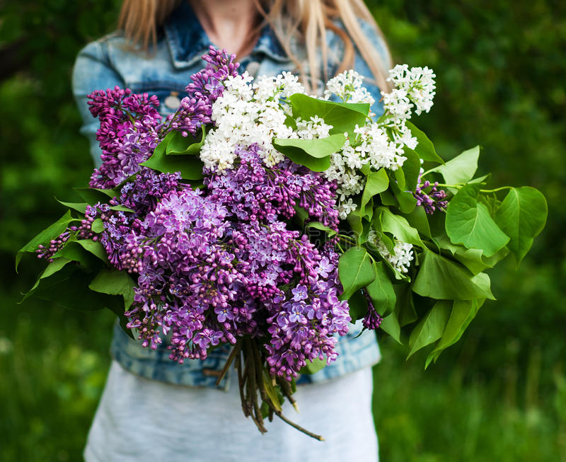 Blooming lilac flowers in hand stock photo