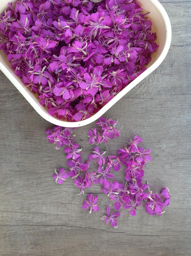 Blooming lilac willow herb Ivan tea on a wooden surface stock photo