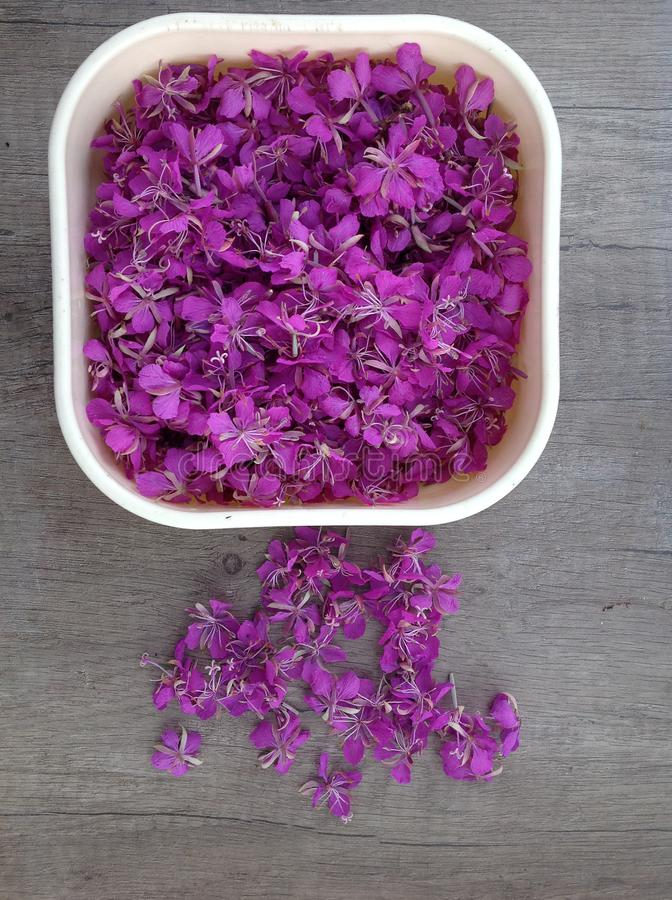 Blooming lilac willow herb Ivan tea on a wooden surface stock photos