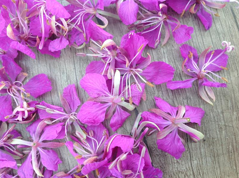 Blooming lilac willow herb Ivan tea on a wooden surface royalty free stock photography