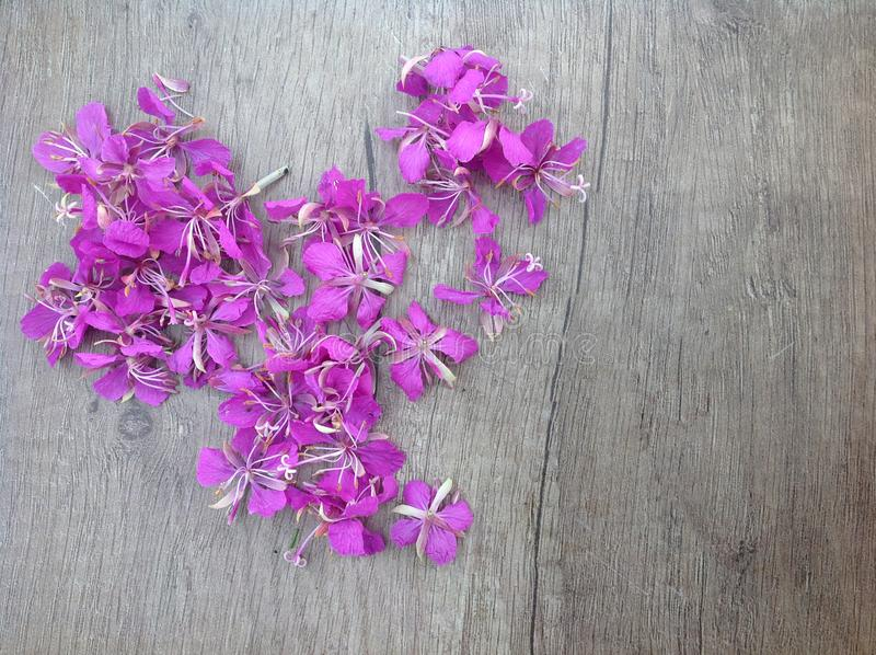 Blooming lilac willow herb Ivan tea on a wooden surface royalty free stock image