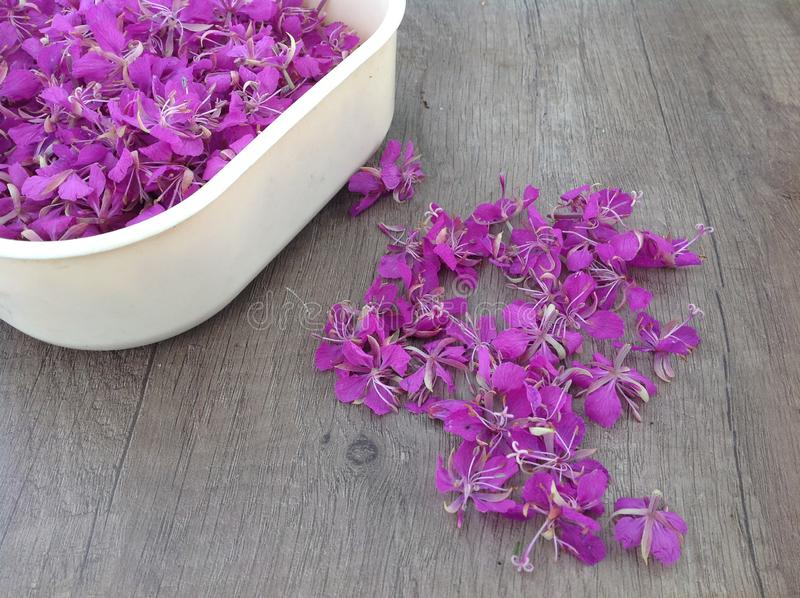 Blooming lilac willow herb Ivan tea on a wooden surface royalty free stock photos