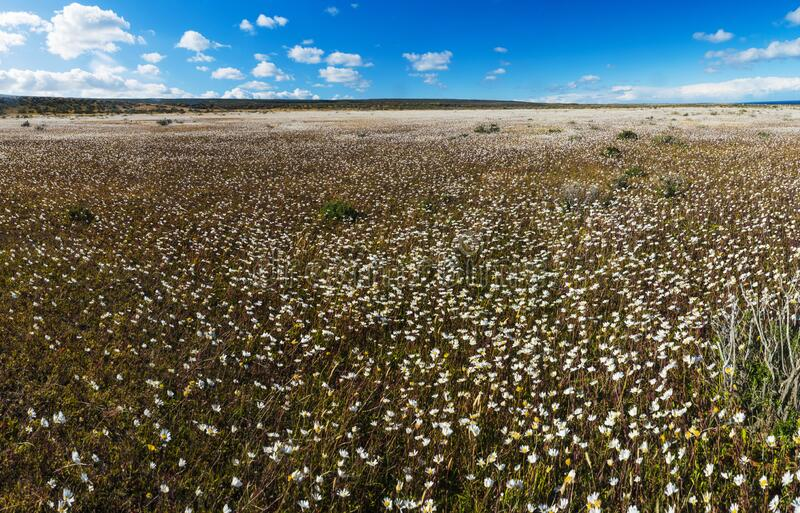 Blooming meadow of Tierra del Fuego in Argentina royalty free stock photography