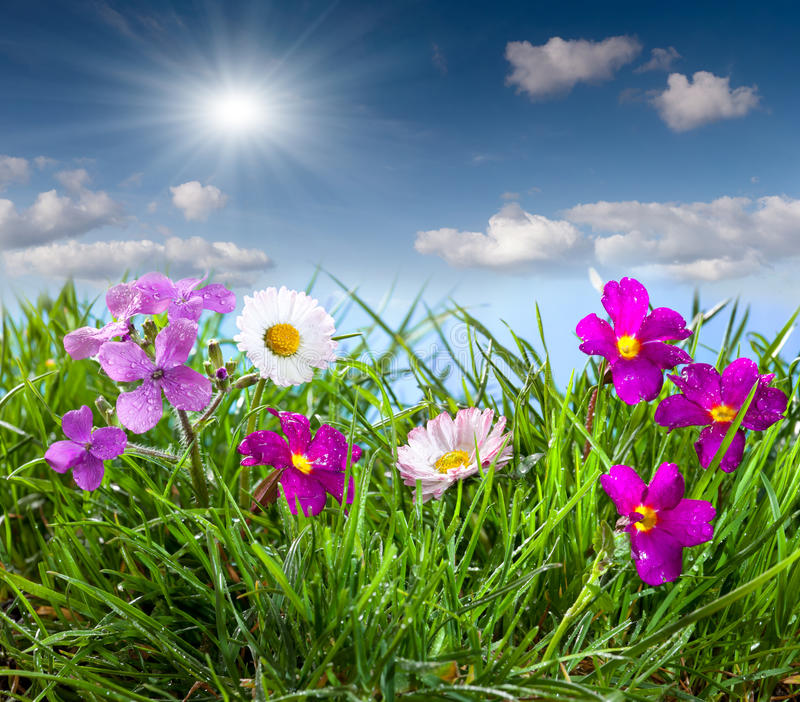 Download Blooming Meadow Under Blue Sky Stock Photo - Image: 24485894