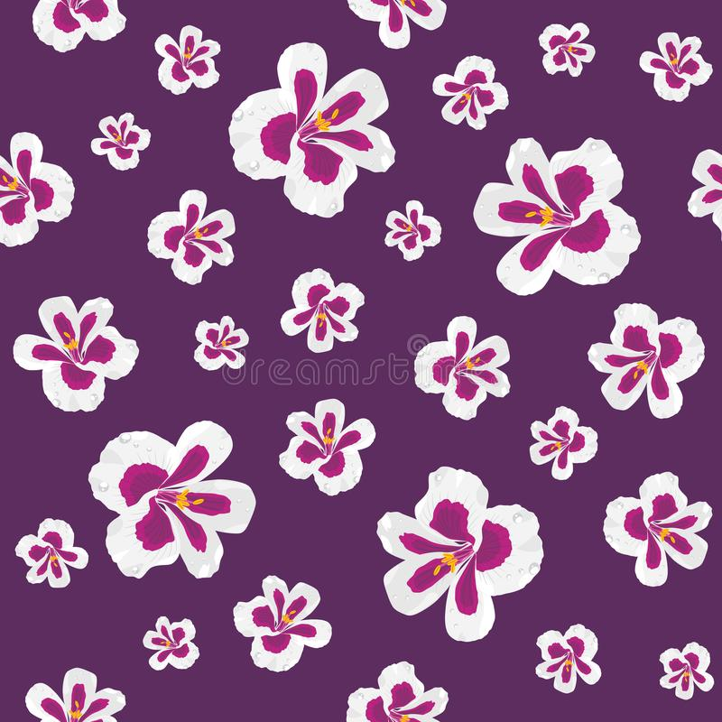 Blooming pelargonium. Seamless pattern for design stock images
